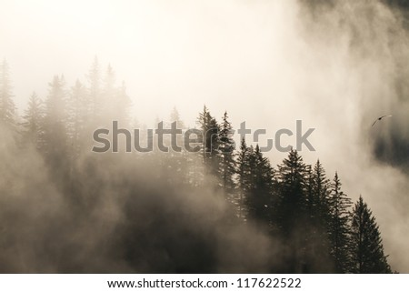 misty foggy forest in morning light - stock photo