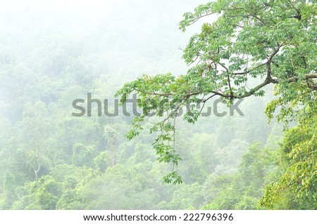 Misty forest at Khao Yai national park, Thailand - stock photo