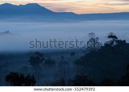 Misty forest in a beautiful hills. Thung salaeng Luang National Park (Nong Mae na), Thailand