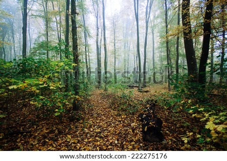 Misty forest in autumn - stock photo