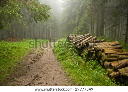 Misty forest in Schwarzwald Germany - stock photo