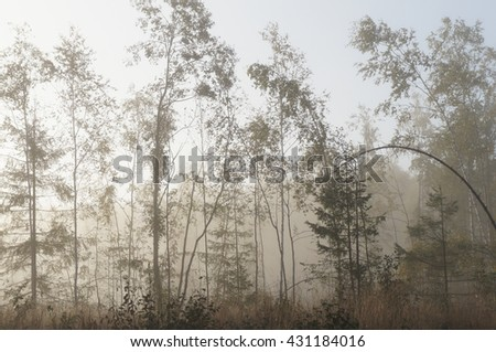Misty forest in sunlight - stock photo