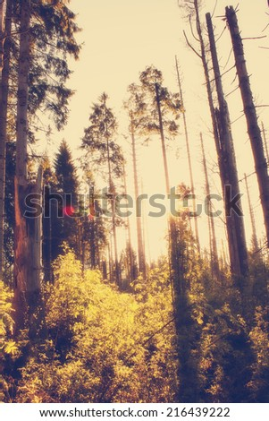 Misty Forest in the Morning Light - stock photo