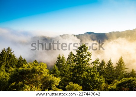 Misty forest on the mountain in California
