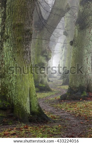 Misty forest. Trees in autumn forest in foggy day and  winding trail. - stock photo