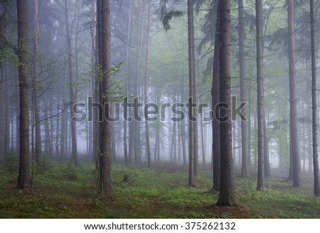 Misty forest with fog and foliage