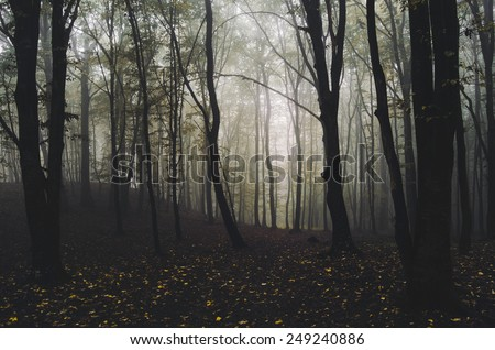 misty forest with leaves on ground - stock photo