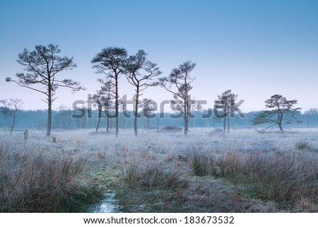 misty frosty morning on marsh, Drenthe, Netherlands - stock photo