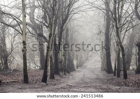 Misty morning in Hampstead Heath woods, London - stock photo