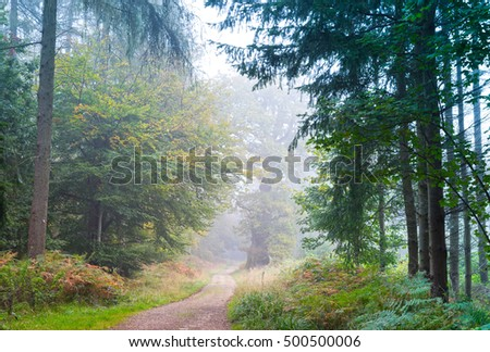 Misty morning in Savernake  Forest , England