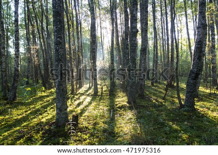 misty morning in the forest, the Karelian isthmus, Russia