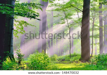 Misty Morning Sunrise on a nature path in the woods. - stock photo