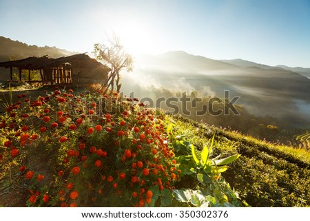 Misty morning Tea plantation in the Doi Ang Khang, Chiang Mai, Thailand - stock photo