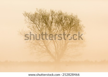 Misty morning with a lonely tree in silhouette - stock photo