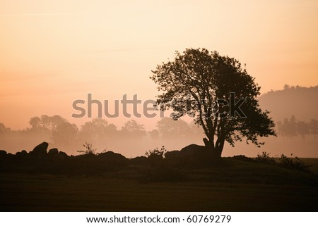 Misty morning with trees in silhouette - stock photo