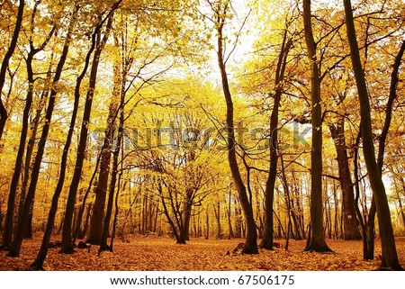 Misty Old autumn Forest in europe - stock photo