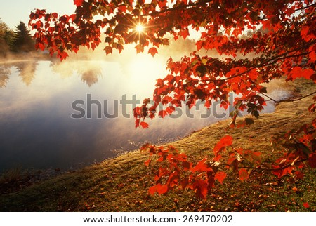 Misty pond with autumn leaves in Connecticut - stock photo