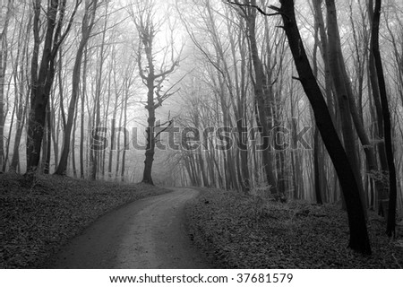 misty road - stock photo