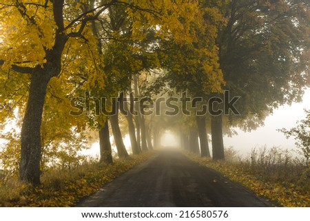 Misty Road in north Poland.Pomerania province/Misty Road - stock photo