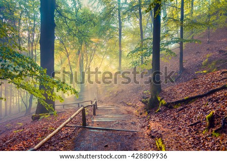 Misty scene in the mountain forest. Colorful morning in Saxon Switzerland National Park, Germany, Europe.Artistic style post processed photo. - stock photo