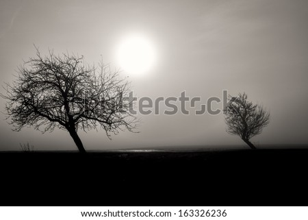 misty silhouette of two trees, black and white landscape with morning sun - stock photo
