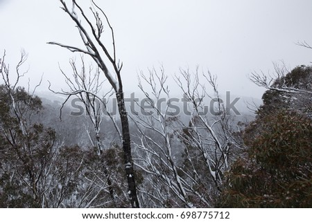 Misty snowy landscape with baren trees and forest