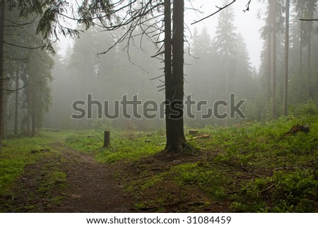 Misty summer morning in Black Forest Germany - stock photo