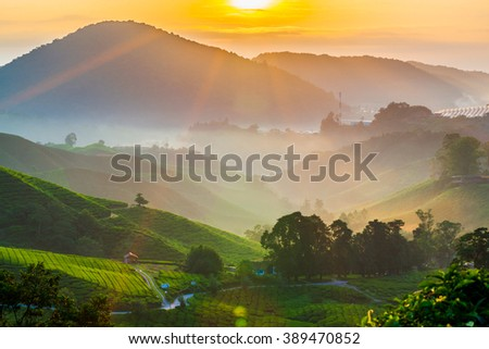 Misty sunrise over tea plantation in Cameron Highlands - stock photo