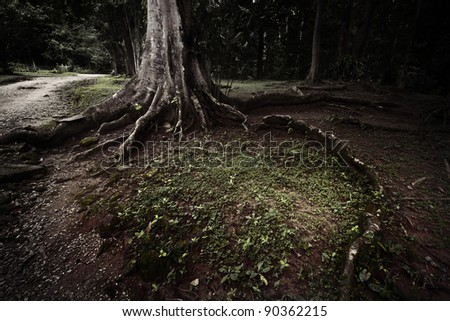 Misty tree with roots and green grass around in dark forest