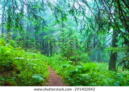 misty wet pine forest - stock photo