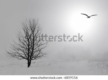 Misty winter landscape - stock photo