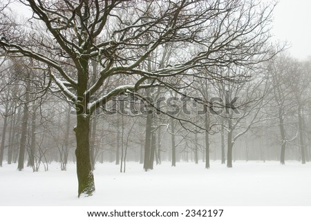 Misty winter trees landscape. Retro look - stock photo