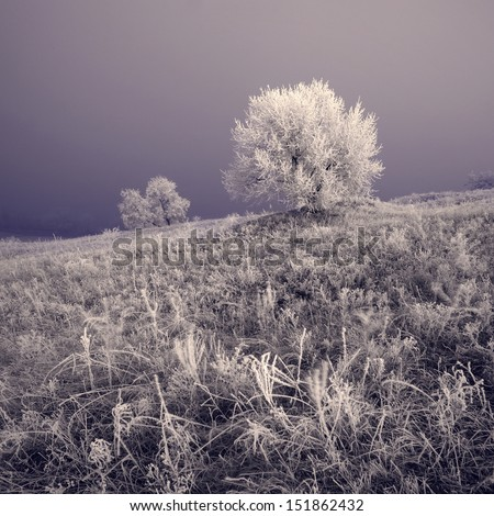 Misty winter valley with beautiful trees in a rime - stock photo