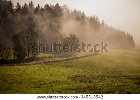 misty woods and field, Europe landscape