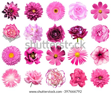 Mix collage of natural and surreal pink flowers 20 in 1: peony, dahlia, primula, aster, daisy, rose, gerbera, clove, chrysanthemum, cornflower, flax, pelargonium isolated on white - stock photo