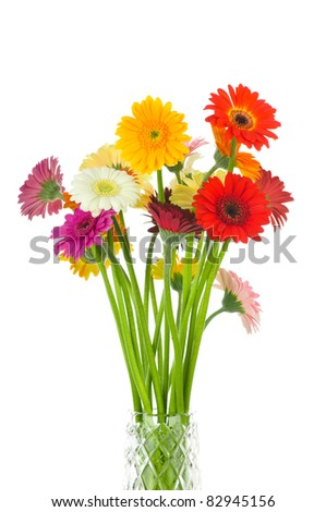 Mix gerber flowers isolated on white background - stock photo