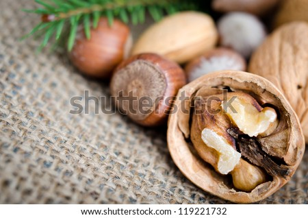 mix nuts and pine - stock photo