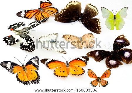 Mix of Colorful Butterfly on white background for texture and design - stock photo