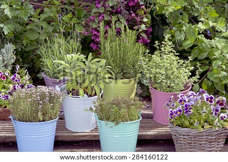 mix of herbs in colored buckets in garden - stock photo