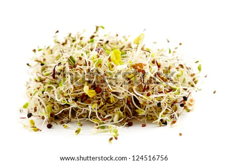 Mix of various germ sprouts isolated on white background - stock photo
