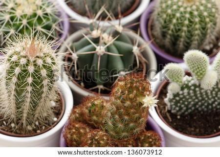 Mix of various indoor cacti. - stock photo