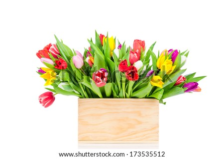 Mix tulips in the box