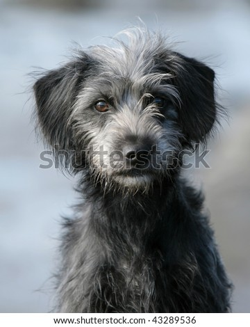 Mixed-breed dog - stock photo