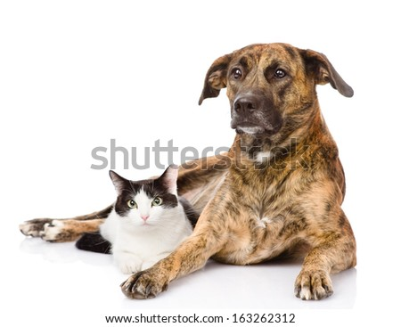 mixed breed dog and cat together. isolated on white background - stock photo