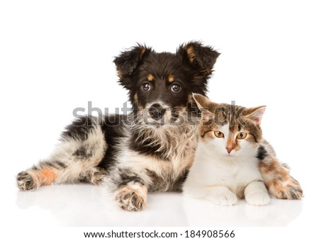 mixed breed dog and hugging cute cat. isolated on white background