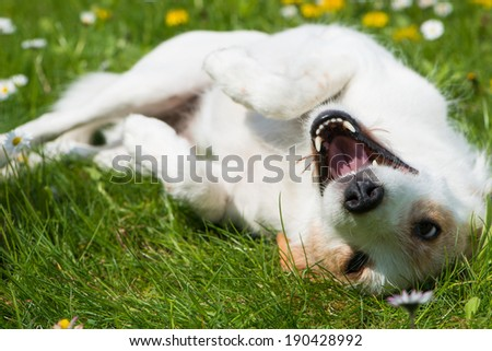 Mixed breed dog in a flower meadow - stock photo