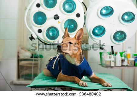 Mixed breed dog in animal hospital