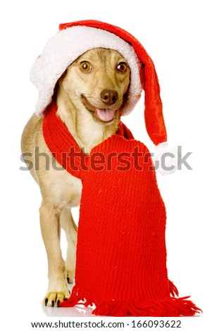 mixed breed dog in red christmas Santa hat. isolated on white background - stock photo