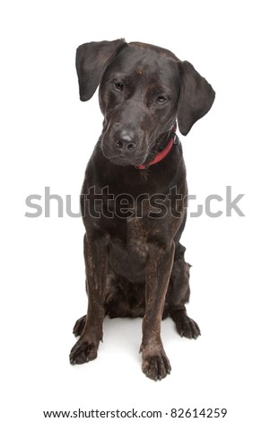 Breed Of Dog In The Range Rover Commercial To Download ...