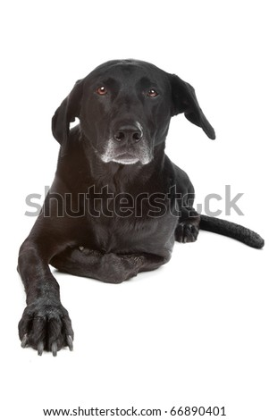 Mixed breed dog lying, looking at camera, isolated on a white background - stock photo